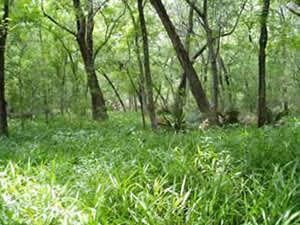 austin-wetlands