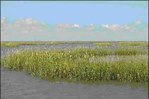 san-antonio-wetlands
